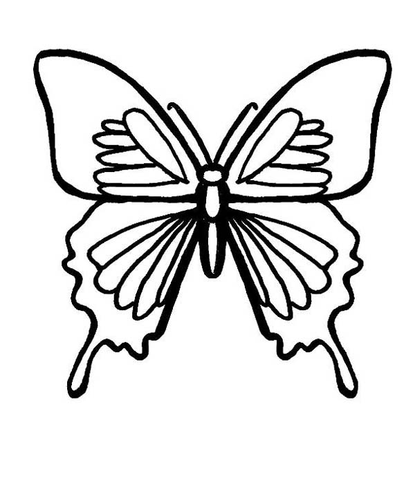 Butterfly A With Birdwing Marks Coloring Page