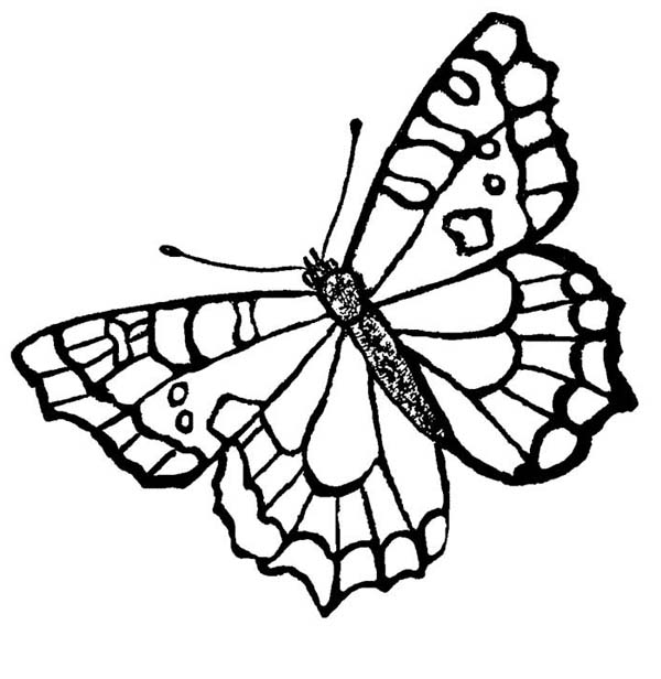 A Butterfly with Spotting Mark Wings Coloring Page Download