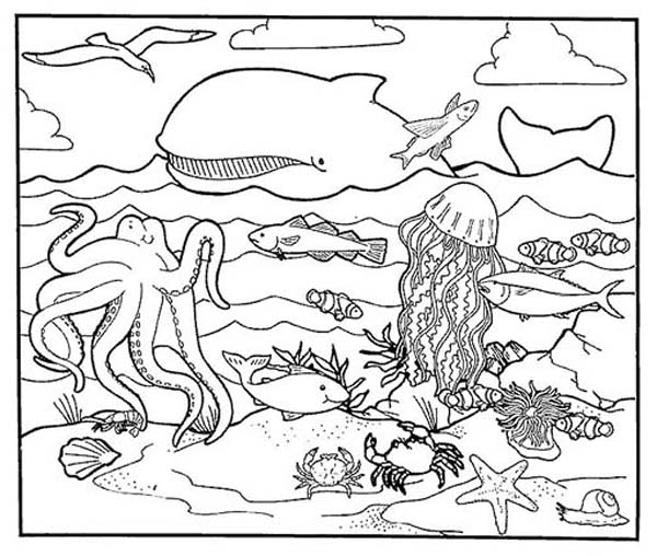 A Healty Habitat Of Sea Animal Coloring Page