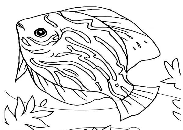 Beautiful Saltwater Fish Sea Animals Coloring Page