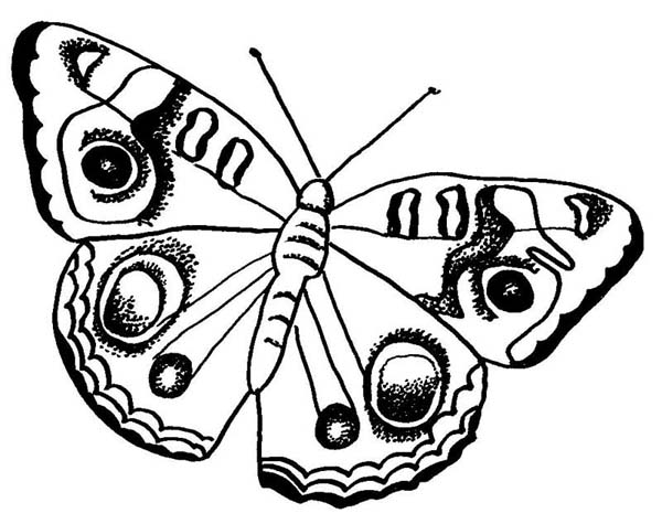 Butterfly with Rounded Pattern Wings Coloring Page Download