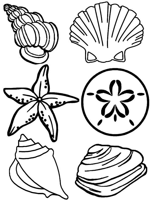 seashell coloring page - complete sea shells family free coloring page download
