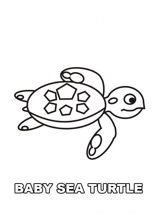 Cute Baby Sea Turtle free coloring page Download Print