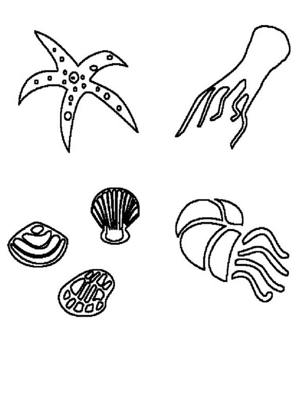 Deep Sea Animals And Free Shells Coloring Page