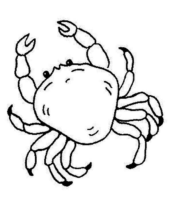 Line Drawing Of Water Animals : Free king crab sea animals coloring page download