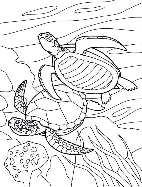 Free Picture of Sea Turtle Mating Coloring Page Download Print