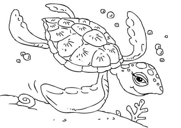 Free Sea Turtle Swimming Coloring Page Download Print Online Swimming Coloring Pages