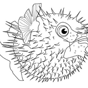 Fugu Fish   Free Sea Animals Coloring Page