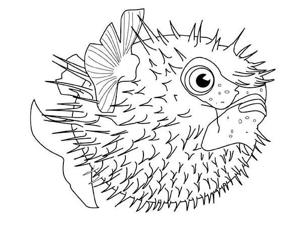 Fugu Fish Free Sea Animals Coloring Page Download Print