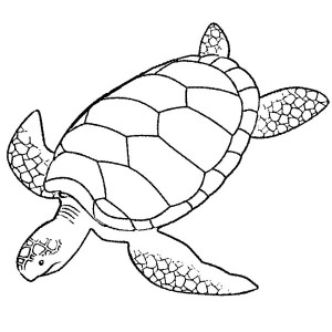 Giant Green Sea Turtle Coloring Page