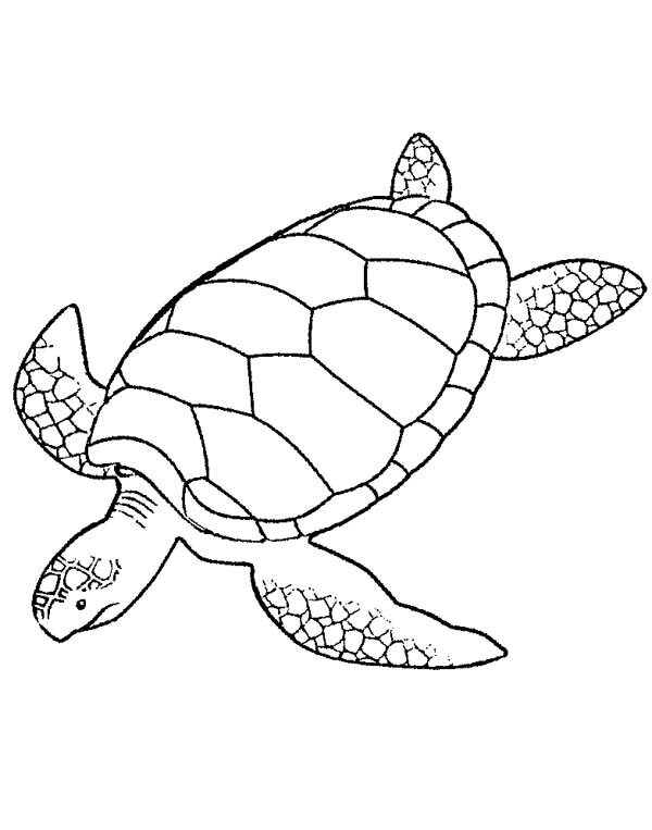 Giant Green Sea Turtle Coloring Page - Download & Print ...