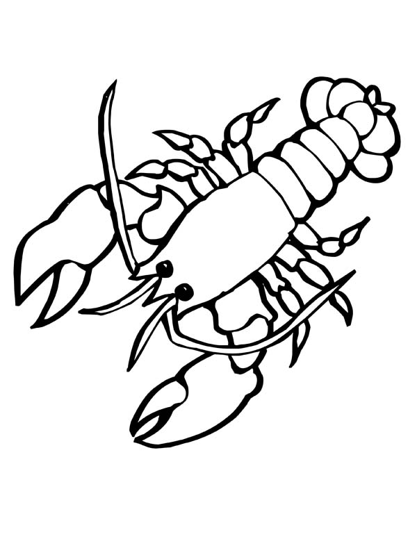 giant sea lobster with big clasp sea animals coloring page - Lobster Coloring Page