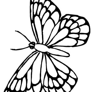 Lovely Butterfly Flying Around Coloring Page