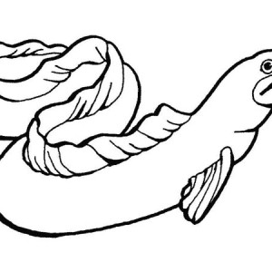 Moray Eel slippery Sea Animals Coloring Page