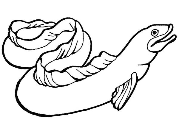 gulper eel coloring pages - photo#16