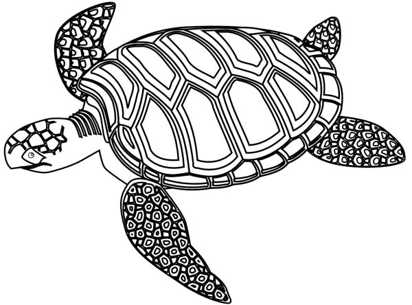 Mozaic green sea turtle coloring page download print for Sea turtles coloring pages
