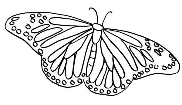 Painted Lady Butterfly Illustration Coloring Page - Download & Print ...