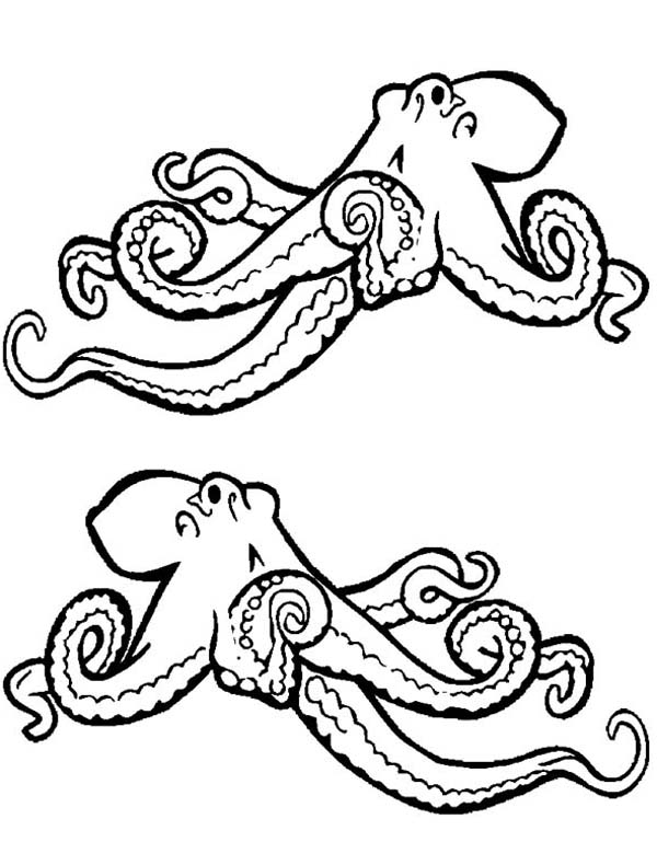 realistic octopus sea animals fee coloring page