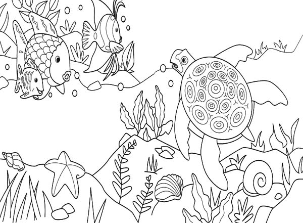Sea Turtle Activities Free Coloring Page Download Print Online