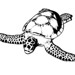 Sea Turtle Conservancy FREE Coloring Sheet