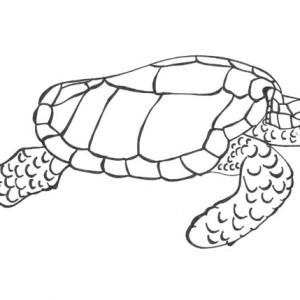Sea Turtle Dive Charters Free Coloring Page