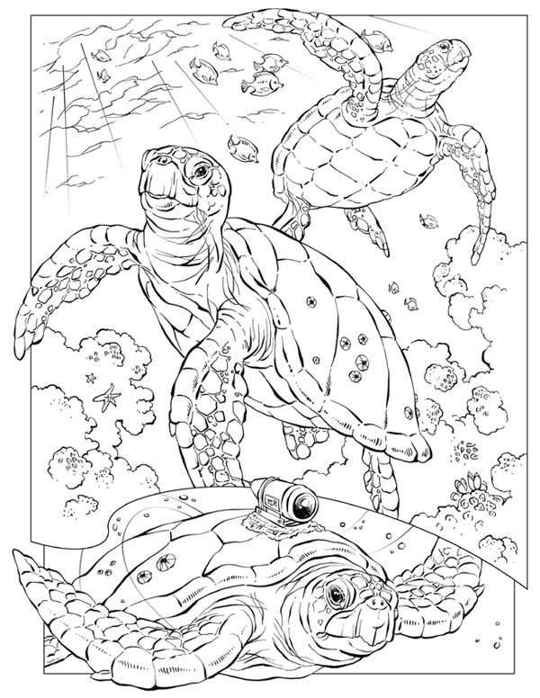 Sea Turtle Documentary Crittercam Coloring Page Download Print