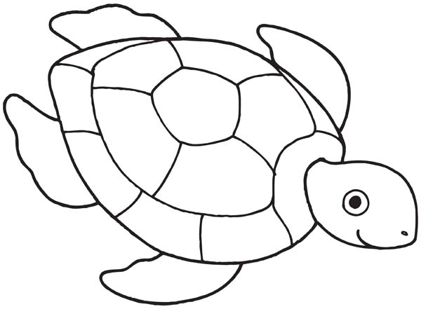 Sea turtle drawing free coloring page
