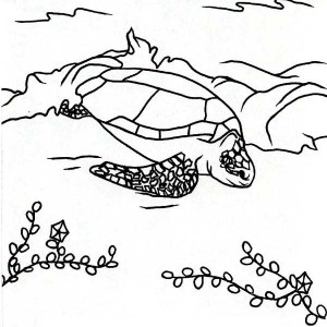 Sea Turtle Excavation Free Coloring Page