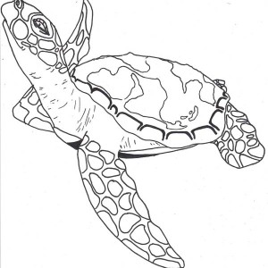 sea turtle coloring pages realistic-#27