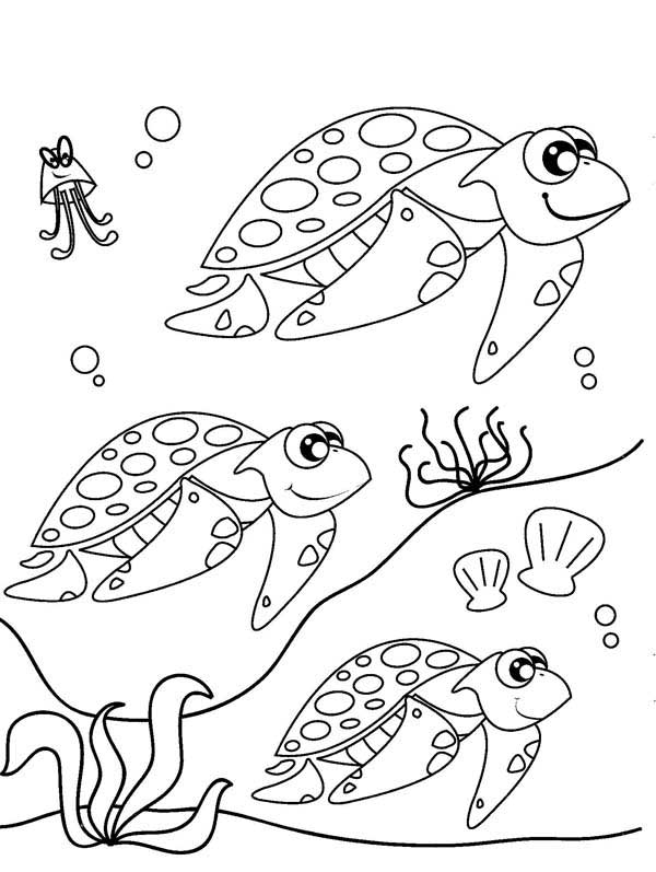 Sea Turtle Migration Free Coloring Page PageFull