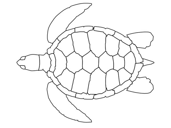 Sea turtle pattern free coloring page download print for Sea turtles coloring pages