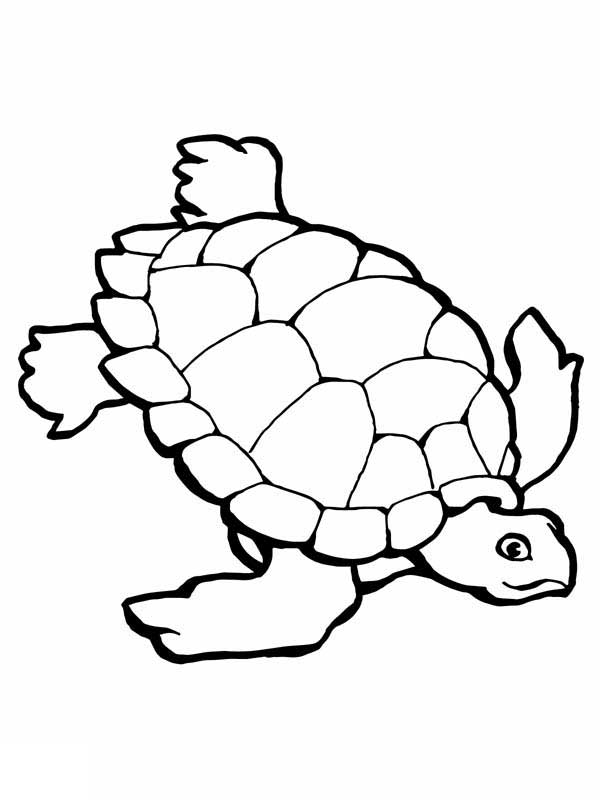 Sea Turtle Research Free Coloring Page Download Print Online