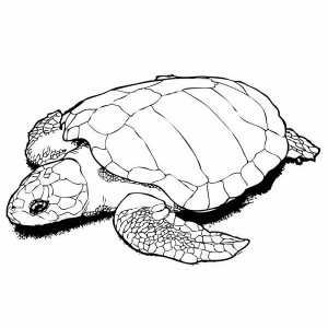 Sea Turtle in Nesting Kemp Free Coloring Page