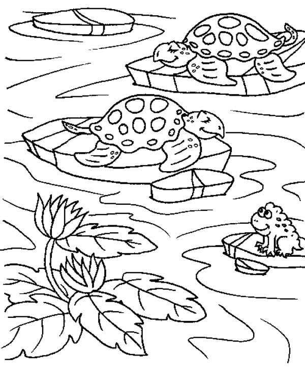 Free Coloring Pages Pond Animals : Sea turtle in a ponds with frog coloring page download