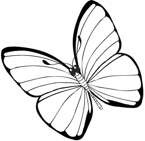 Butterfly Simple And None Pattern Coloring Page