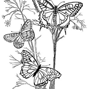 Three Beautiful Butterflies on the Branch Coloring Page