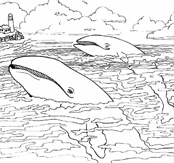 sea animals two giant whale near lighthouse coloring page two giant whale near lighthouse - Realistic Sea Life Coloring Pages