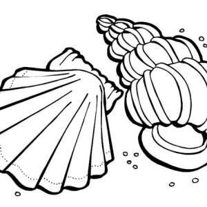 Two Sea Shells   Sea Animals Coloring Page