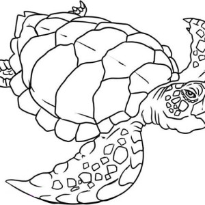 Verry Old Sea Turtle Evolution Coloring Page