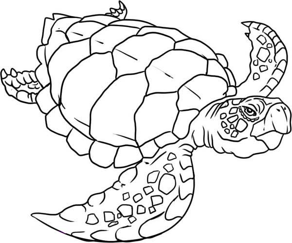 Verry Old Sea Turtle Evolution Coloring Page Download Print