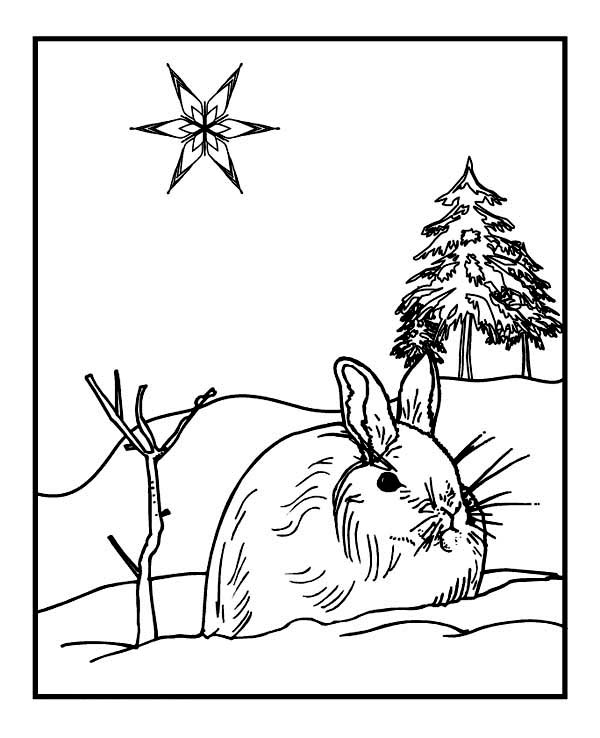 Wild Rabbit on Winter Season Coloring Page Download Print Online