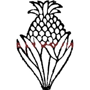 A Less Sweet Queen Pineapple from South Africa Coloring Page