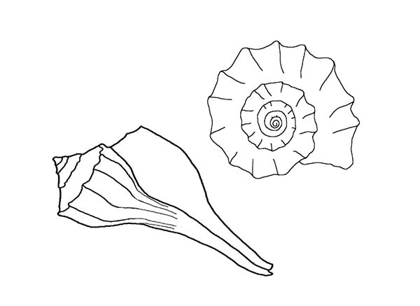 Free coloring pages of sea snails for Sea snail coloring page