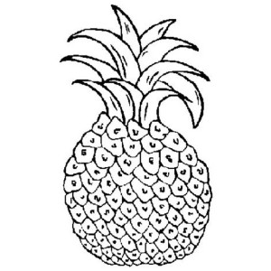 A Red Spanish Pineapple Variety from Central America Coloring Page