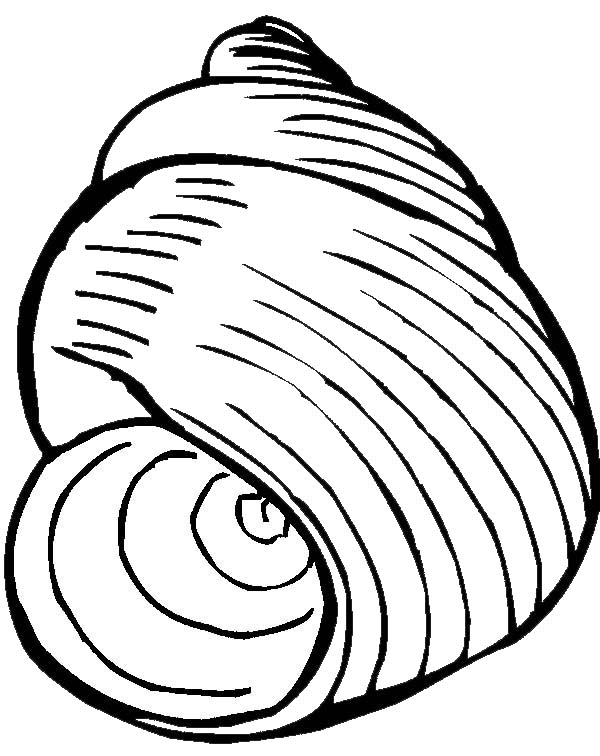 An Exquisite Moon Snail Seashell Coloring Page