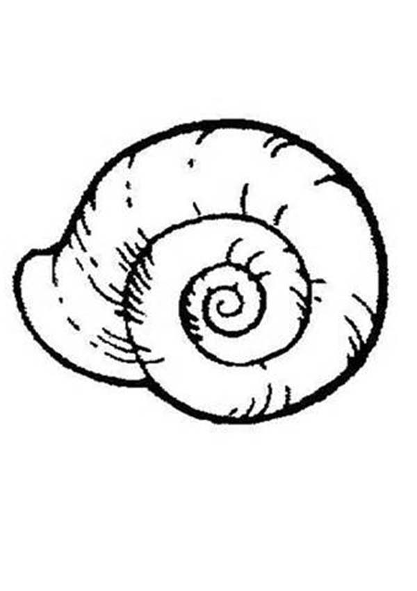An Extinct Ammonoidea Seashell Coloring Page