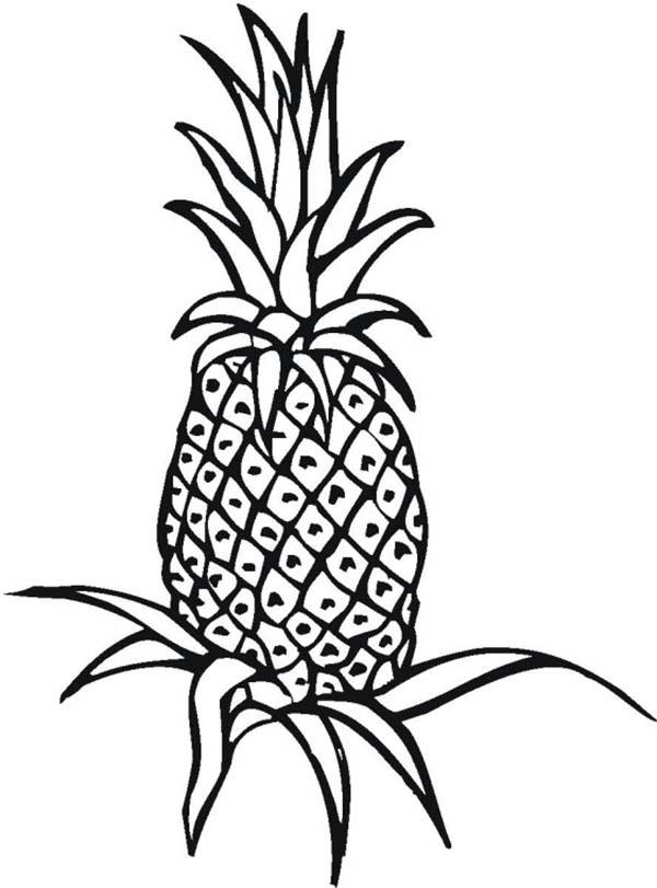 An Unripe Pineapple Plant On The Field Coloring Page An