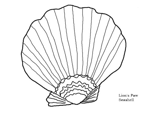 beautiful lions paw seashell coloring page download print