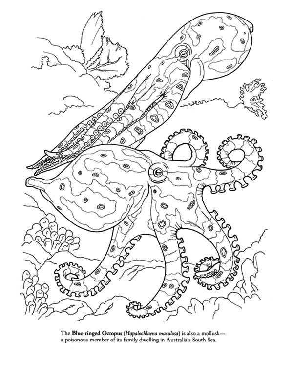 Blue Octopus Coloring Page
