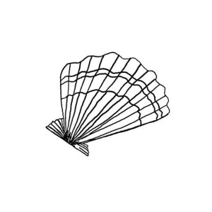 Gorgeous Lions Paw Seashell Coloring Page